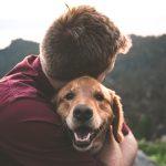 Seguro Animal Estimação | Certezza Seguros